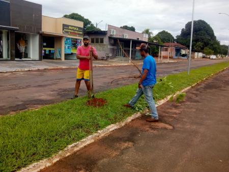 Limpeza das vias urbanas e plantação de ypê na Paulo Vieira
