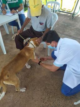 Veterinário atende no Distrito do Taboco